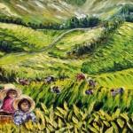 la cueillette du thé / Malaisie